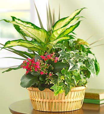 Alexandria Plants and Garden Gifts